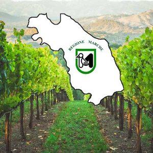 來自的葡萄酒 Marche